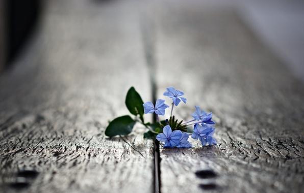 Picture flower, leaves, macro, photo, plant, petals