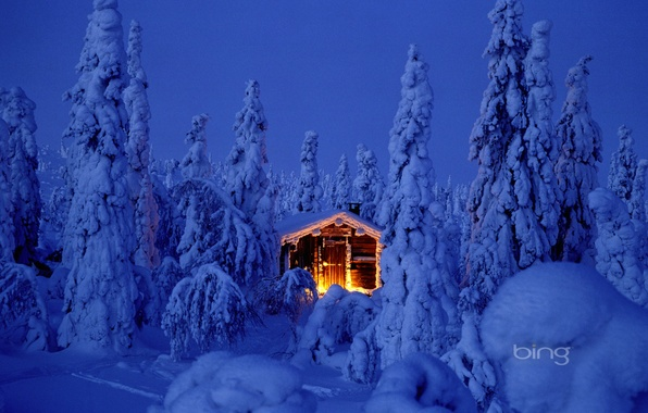 Picture forest, the sky, light, snow, night, nature, lights, tree, new year, hut, Christmas, spruce, the …