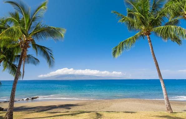 Picture sand, sea, beach, the sky, the sun, clouds, tropics, palm trees, coast, horizon, Hawaii