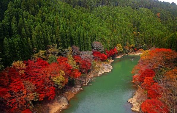 Photo wallpaper Oi River, Arashiyama, Japan, trees, Kyoto, Japan, river, forest