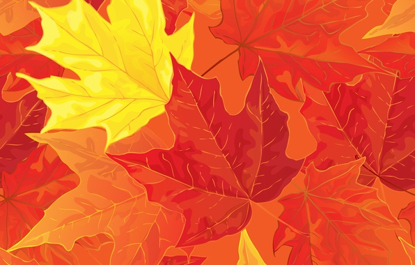 Picture leaves, background, autumn, leaves, autumn, fall, maple