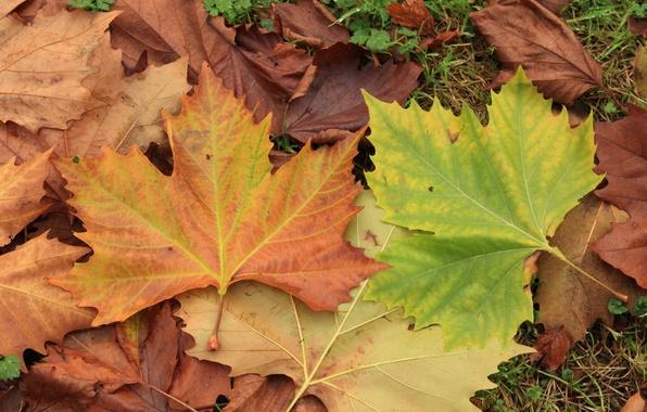 Photo Wallpaper Autumn Leaves Foliage Colors