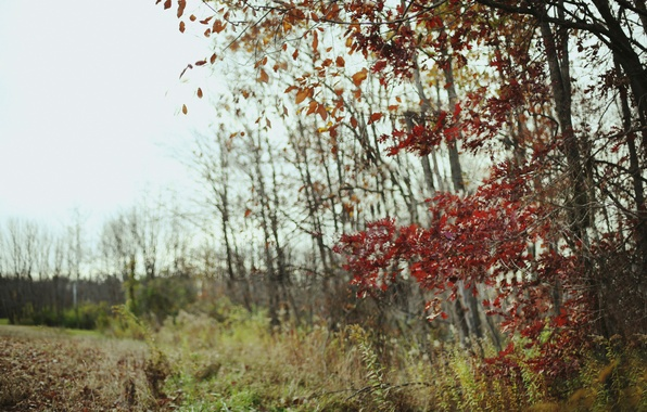Picture field, autumn, forest