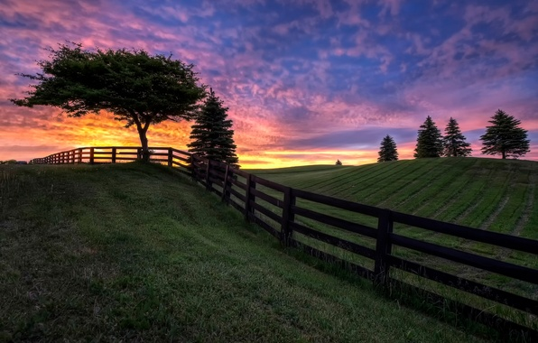 Picture field, the sky, clouds, trees, the fence