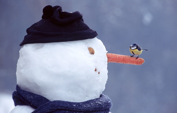 Picture winter, eyes, snow, hat, mouth, scarf, nose, walnut, snowman, sitting, looks, carrots, tit
