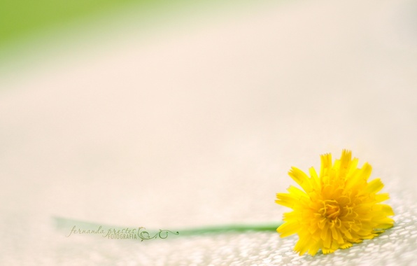 Picture macro, flowers, yellow, green, background, Wallpaper, stem, different, wallpapers, flower
