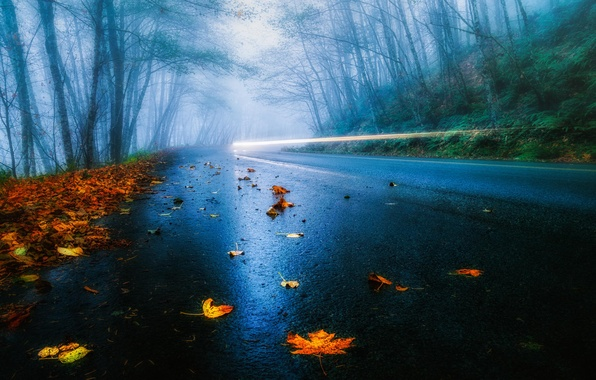 Picture road, autumn, forest, leaves, light, trees, fog, rain, lights, excerpt, USA, car