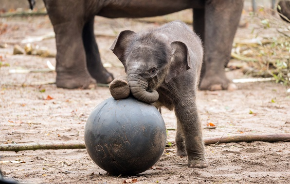 Picture the game, elephant, baby