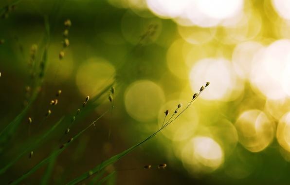 Picture greens, grass, macro, light, nature, glare, green, plant, grass, bokeh