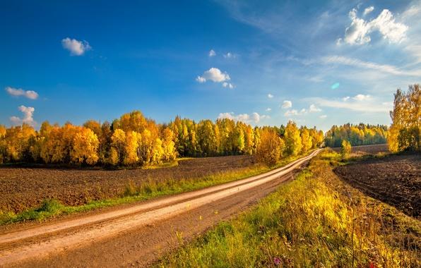 Picture road, field, autumn, landscape, nature