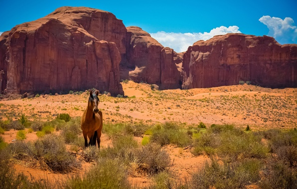 Picture rocks, desert, horse, Mustang, AZ, Utah, USA, Wild West, Monument valley