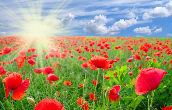 Picture field, summer, the sky, clouds, flowers, Maki, red, the rays of the sun