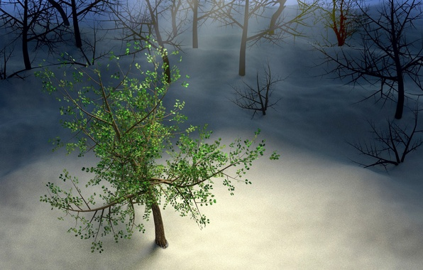 Picture winter, forest, leaves, rays, snow, night, tree, wood, night, snow, tree