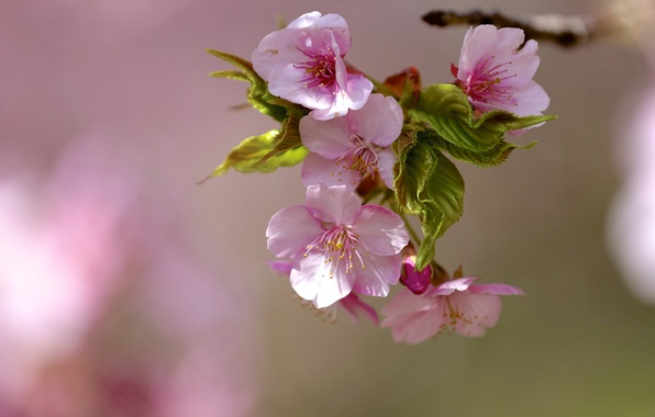 Picture flowers, tree, branch, spring, leaves, flowering, flowers
