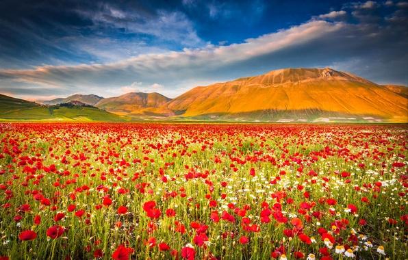 Wallpaper field the sky mountains maki meadow italy - Italy screensaver ...