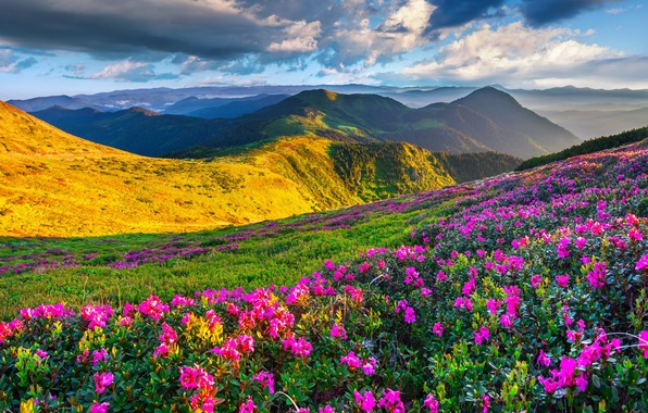 Picture the sky, the sun, flowers, mountains, spring, landscape, nature, meadows