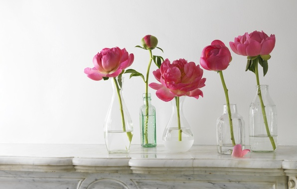 Picture stems, petals, Bud, bottle, pink, peonies, vases, composition