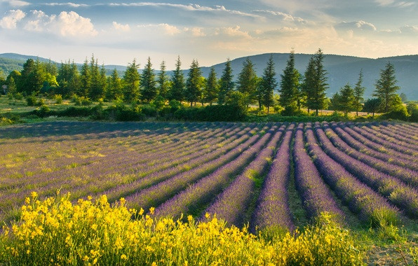 Picture field, the sky, landscape, flowers, nature, spring, lavender, purple flowers