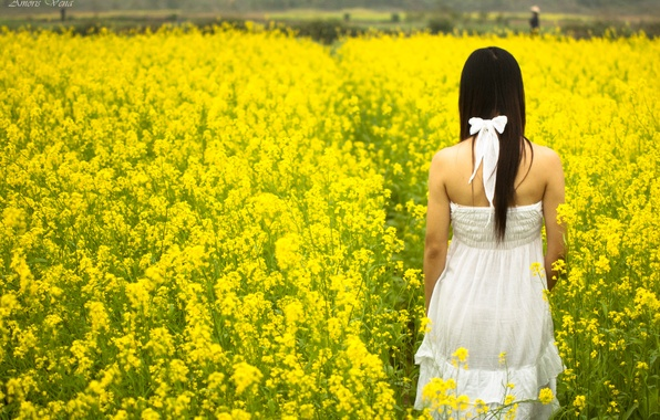 Picture field, white, summer, girl, the sun, flowers, yellow, background, widescreen, Wallpaper, mood, field, dress, brunette, …