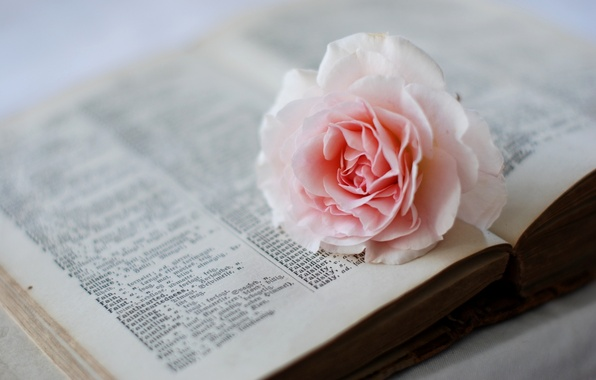Picture flower, pink, rose, dictionary, book, page