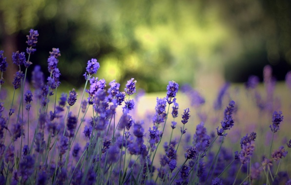 Picture summer, flowers, nature, background, Wallpaper, glade, plants, flowering