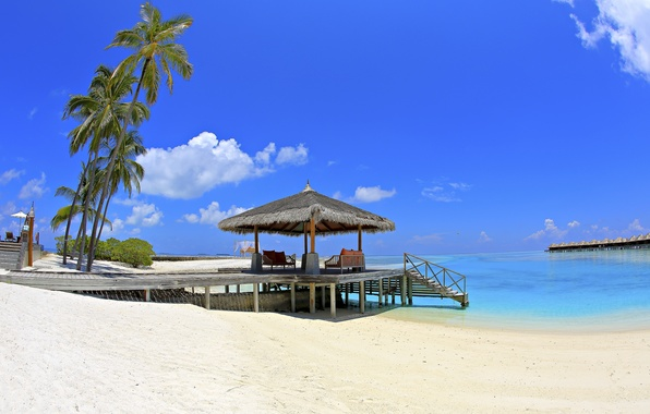 Picture sand, sea, beach, the sky, clouds, palm trees, stay, Paradise, The Maldives, Bungalow