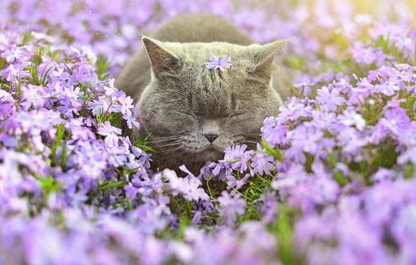 Picture cat, flowers, sleep
