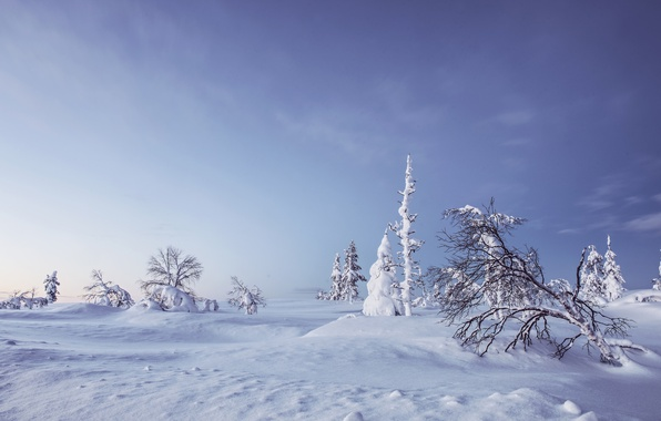 Picture winter, snow, trees, the snow, Finland, Finland, Lapland, Lapland