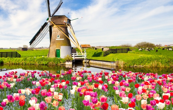 Picture field, the sky, clouds, landscape, flowers, nature, spring, tulips