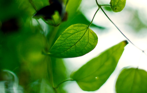 Picture leaves, macro, nature, plant, blur, green