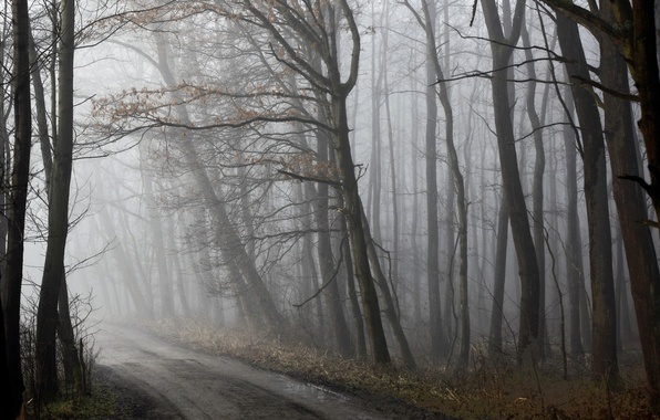 Picture road, forest, fog, spring, morning