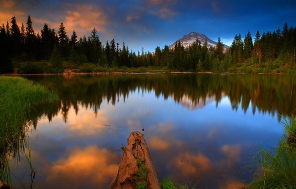 Picture forest, water, landscape, nature, lake, photo, USA, Oregon, Mt Hood National