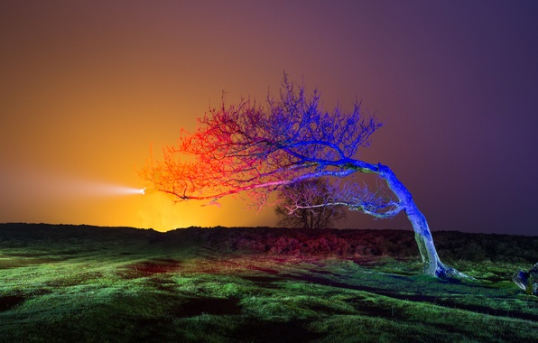 Picture field, the sky, light, sunset, tree, the evening