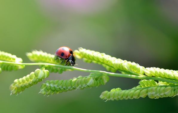 Picture macro, ladybug, a blade of grass
