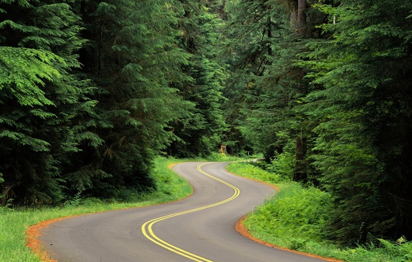 Picture trees, Road, 151, turn