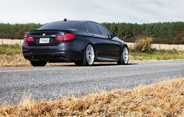 Picture the sky, trees, black, BMW, BMW, black, Blik, back, f10