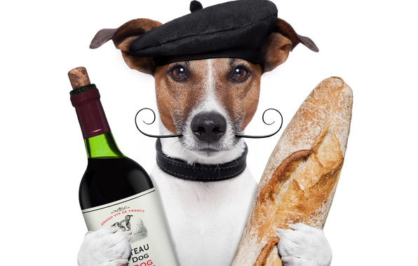 Picture mustache, wine, bottle, dog, humor, paws, bread, white background, cap, baton, Jack Russell Terrier