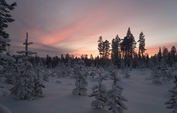 Photo wallpaper winter, forest, snow, trees, sunset, Finland, Lapland