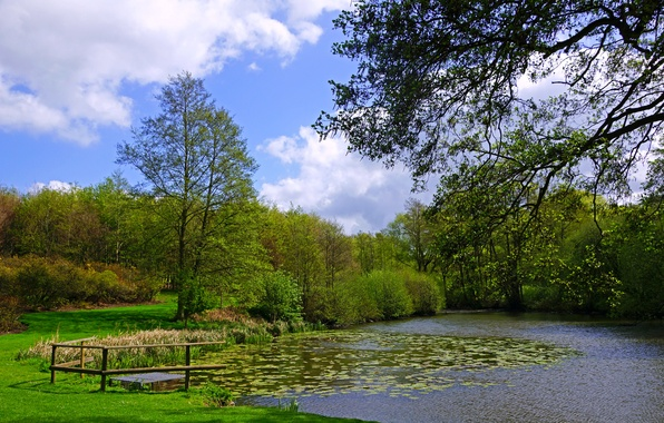 Picture greens, grass, clouds, trees, branches, pond, the reeds, England, garden, the bushes, duckweed, Leeds Castle