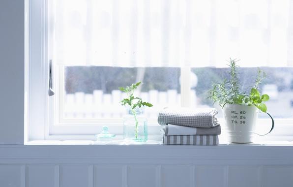 Picture flowers, room, interior, towel, plants, window, apartment