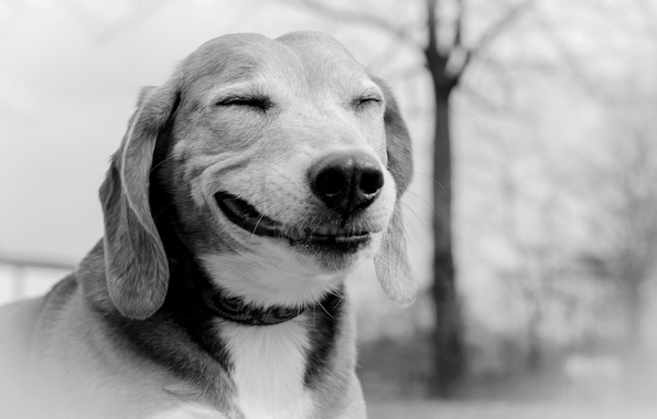 Picture smile, each, dog