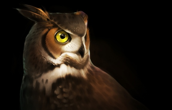 Picture eyes, owl, bird, feathers, art