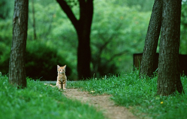 Picture forest, cat, grass, cat, trees, nature, kitty, trail, red, sitting, cat