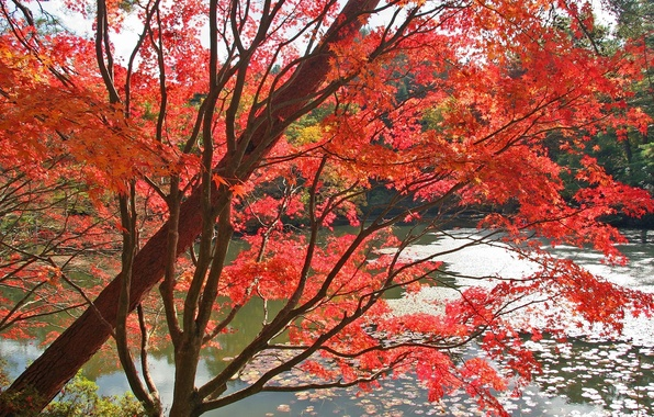 Picture autumn, red, Water, Trees, Leaves