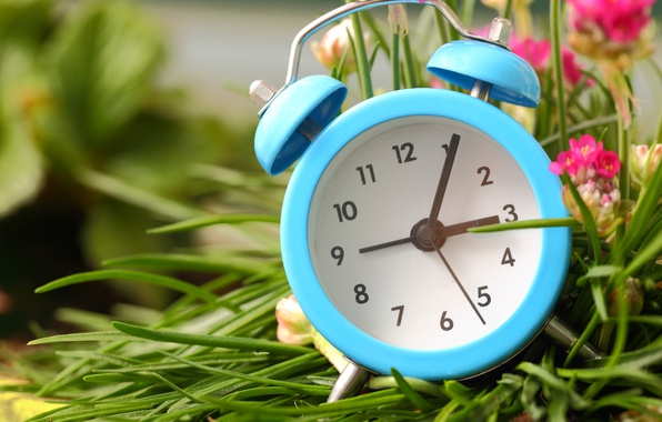 Picture grass, flowers, watch, alarm clock, dial