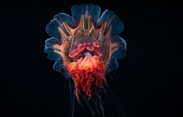 Picture darkness, jellyfish, the bottom of the sea, alien