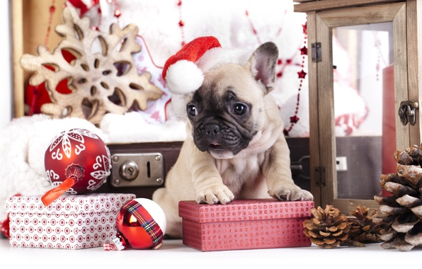 Picture balls, toys, dog, gifts, puppy, bumps, cap, French bulldog