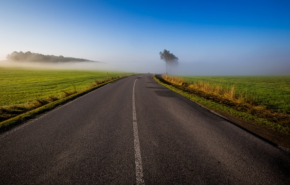 Picture road, field, the sky, grass, trees, fog, morning