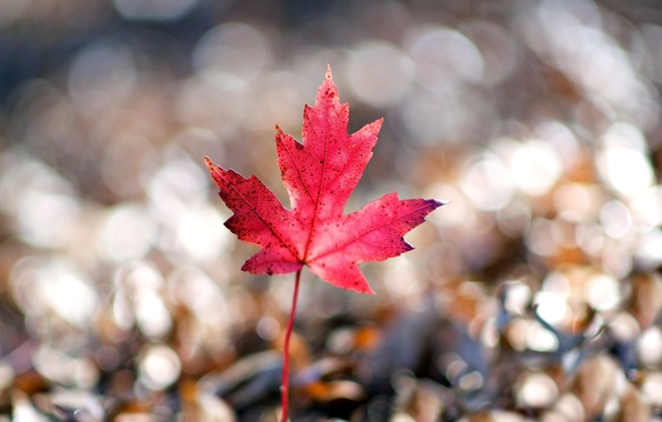 Picture macro, red, background, pink, widescreen, Wallpaper, blur, leaf, wallpaper, form, leaf, widescreen, background, macro, bokeh, …