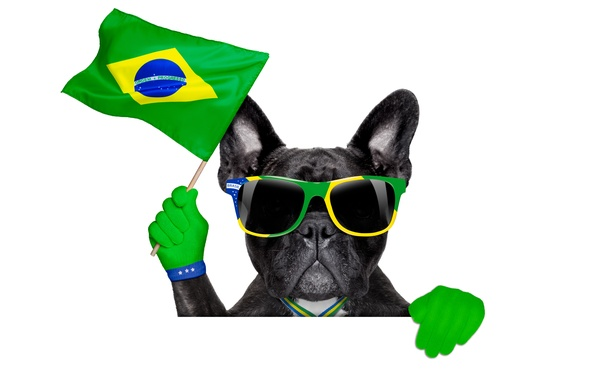Picture dog, glasses, logo, dog, football, flag, funny, cool, World Cup, Brasil, FIFA, 2014
